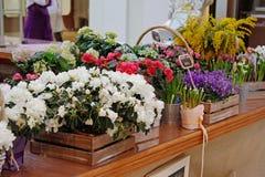 Flores bonitas diferentes em umas caixas de madeira e em uns potenciômetros de flor Imagens de Stock Royalty Free