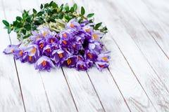 Flores bonitas do açafrão no fundo gasto de madeira Fotografia de Stock Royalty Free