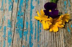 Flores bonitas do calendula e das violetas no lado da placa de madeira pintada velha com quebras Fotografia de Stock Royalty Free