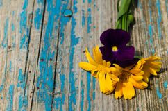 Flores bonitas do calendula e das violetas no lado de uma placa de madeira velha pintada com pintura azul Fotos de Stock