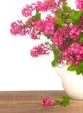 Flores bonitas do corinto no vaso na madeira rústica com fundo branco Imagem de Stock