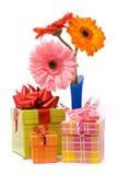 Flores bonitas do gerber imagens de stock