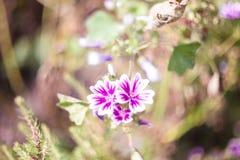 Flores bonitas do jardim Imagem de Stock Royalty Free