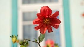 Flores bonitas do jardim vídeos de arquivo