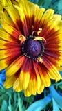 Flores bonitas do jardim do verão de Michigan foto de stock royalty free