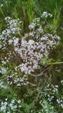 Flores bonitas do jardim do verão de Michigan imagens de stock royalty free