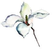 Flores bonitas do magnolia Imagem de Stock Royalty Free