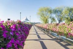 Flores bonitas do petúnia na ponte sobre o rio no parque de Hangang, Seoul, Coreia do Sul imagem de stock