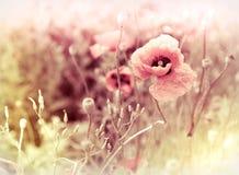 Flores bonitas do prado Imagem de Stock Royalty Free