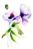 Flores bonitas do verão Fotos de Stock Royalty Free