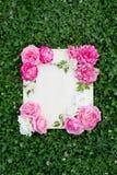 Flores bonitas do verão e placa de madeira na grama verde fotografia de stock royalty free