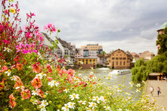 Flores bonitas do verão sobre a opinião europeia da cidade foto de stock royalty free