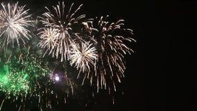 Flores bonitas dos fogos-de-artifício no céu noturno Brilhantemente os fogos-de-artifício azuis no preto escuro colorem o fundo O video estoque