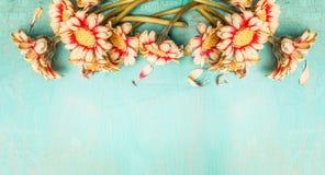 Flores bonitas en el fondo elegante lamentable de la turquesa, visión superior, frontera Imagen de archivo libre de regalías