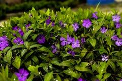 Flores bonitas eu gosto de fowers Fotografia de Stock