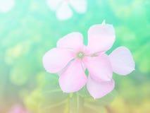 Flores bonitas feitas com filtros coloridos Foto de Stock Royalty Free