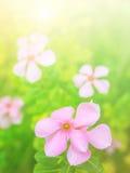 Flores bonitas feitas com filtros coloridos Foto de Stock