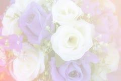 Flores bonitas feitas com filtros de cor Fotografia de Stock Royalty Free