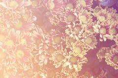 Flores bonitas feitas com filtros de cor Fotografia de Stock