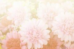 Flores bonitas feitas com filtros de cor Fotos de Stock Royalty Free
