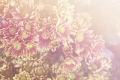 Flores bonitas feitas com filtros de cor Fotos de Stock