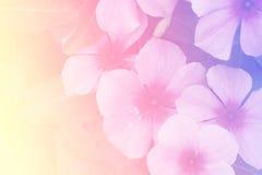 Flores bonitas feitas com filtros de cor Imagem de Stock Royalty Free