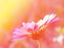 Flores bonitas feitas com fundo dos filtros de cor Fotos de Stock