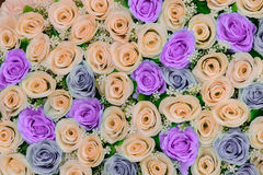 Flores bonitas fundo e textura para a cena do casamento Imagens de Stock Royalty Free