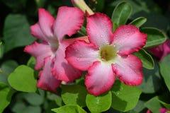 Flores bonitas na estação das chuvas imagem de stock