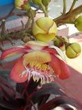Flores bonitas na mola Imagens de Stock