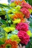 Flores bonitas na mola imagem de stock royalty free