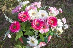 Flores bonitas na natureza Imagem de Stock Royalty Free