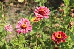 Flores bonitas na natureza fotografia de stock