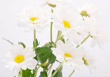 Flores bonitas no fundo branco Fotos de Stock Royalty Free