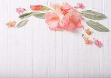 Flores bonitas no fundo de madeira branco Fotografia de Stock