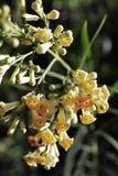 Flores bonitas no jardim Fotografia de Stock