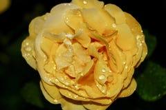 Flores bonitas no jardim Foto de Stock