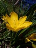 Flores bonitas no jardim do Arapovsky Monastир foto de stock