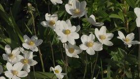 Flores bonitas no jardim durante o dia de verão filme
