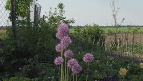 Flores bonitas no jardim durante o dia de verão video estoque
