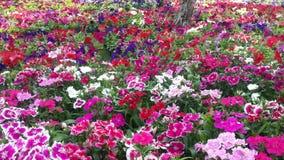 Flores bonitas no jardim sob o sol do inverno Fotografia de Stock Royalty Free