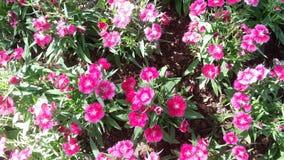 Flores bonitas no jardim sob o sol do inverno Imagens de Stock Royalty Free