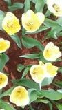 Flores bonitas no jardim sob o sol do inverno Imagem de Stock Royalty Free