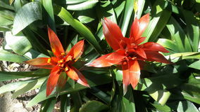 Flores bonitas no jardim sob o sol do inverno Fotos de Stock Royalty Free