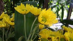 Flores bonitas no jardim sob o sol do inverno Foto de Stock