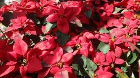 Flores bonitas no jardim sob o sol do inverno Imagem de Stock