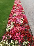 Flores bonitas no parque Imagens de Stock Royalty Free