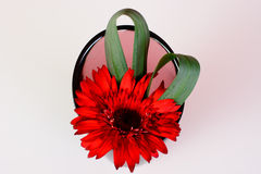 Flores bonitas no vaso Fotos de Stock