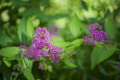 Flores bonitas para cartões e cumprimentos Fotos de Stock