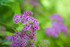 Flores bonitas para cartões e cumprimentos Fotografia de Stock Royalty Free